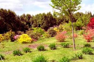 Rhododendrongarten Königshain